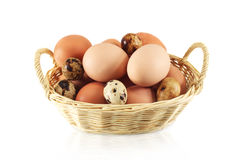 Chicken eggs and quail eggs Royalty Free Stock Image