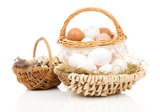Chicken eggs and quail eggs in basket Stock Image