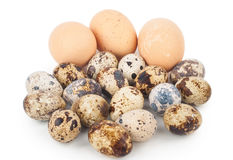 Chicken eggs and quail eggs Stock Photo