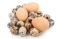 Chicken eggs and quail eggs Stock Photography