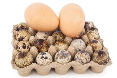 Chicken eggs and quail eggs Royalty Free Stock Photography