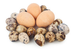 Chicken eggs and quail eggs Stock Image