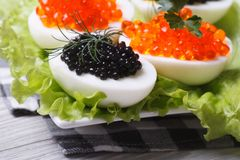 Chicken eggs with red and black fish caviar Stock Image