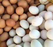 Chicken eggs Stock Photos