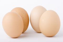 Chicken eggs standing upright. Four organic chicken eggs standing upright isolated on white Royalty Free Stock Photos