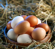 Chicken eggs in the straw Stock Photos