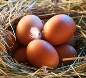 Chicken eggs in the straw Stock Images