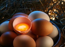 Chicken eggs in the straw Stock Photo
