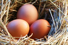 Chicken eggs in the straw Royalty Free Stock Images