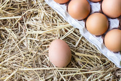 Chicken eggs on a straw Royalty Free Stock Photo