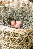 Chicken eggs on a straw Royalty Free Stock Photos