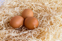 Chicken eggs in the straw. Brown chicken eggs lay in the straw. Side view Royalty Free Stock Images
