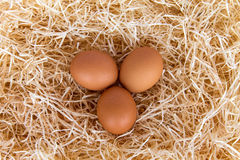 Chicken eggs in the straw. Brown chicken eggs lay in the straw. View from above Royalty Free Stock Photos