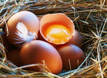 Chicken eggs in the straw with half Royalty Free Stock Images