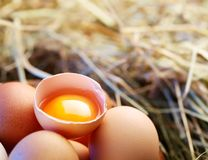 Chicken eggs in the straw with half a broken egg Stock Images