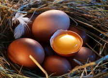 Chicken eggs in the straw with half a broken egg Royalty Free Stock Photography