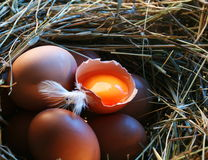 Chicken eggs in the straw. Stock Image