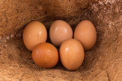 Chicken eggs in straw nest at farm Stock Image