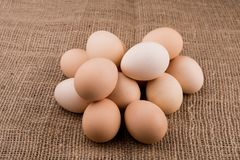 Chicken eggs closeup. homemade eggs chicken. Chicken eggs on the table. Cooking amlet. fresh eggs. the birth of little chickens stock image