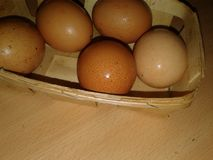 Chicken Eggs in a Trash. Greenery Royalty Free Stock Images
