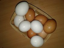 Chicken Eggs in a Trash. Greenery Royalty Free Stock Photos