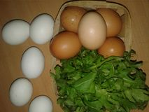Chicken Eggs in a Trash. Greenery Stock Images