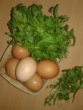 Chicken Eggs in a Trash. Greenery Stock Image