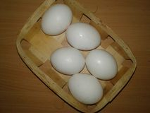 Chicken Eggs in a Trash. Greenery Stock Photography
