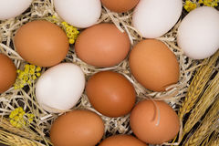 Chicken eggs, wheat, yellow flowers in  straw Stock Image
