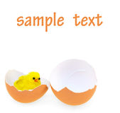 Chicken in the eggshell. Toy chicken in the eggshell on white Stock Image