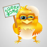 Chicken in eggshell Royalty Free Stock Image