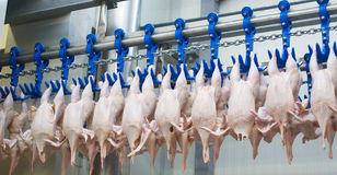 The chicken factory Stock Photography