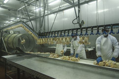 Chicken factory Stock Photography