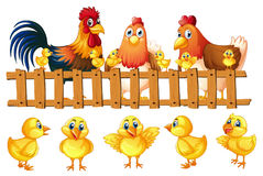 Chicken family with five little chicks. Illustration Royalty Free Stock Photos