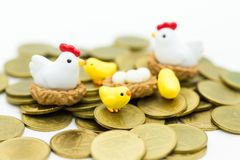 Chicken family, hen sitting eggs hatched on the coins. Image use for animal family Royalty Free Stock Photos