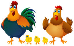 Chicken family with three chicks. Illustration Royalty Free Stock Images