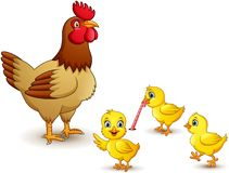 Chicken family on white background vector illustration