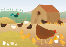 Chicken farm. Vector illustration of a fowls Royalty Free Stock Photo