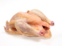 Chicken Farm. Raw chicken on white background Stock Photo