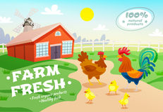 Chicken Farm Advertising Background. Poultry farm healthy organic food composition with flat suburban scenery hen house and group of chicken vector illustration Royalty Free Stock Image