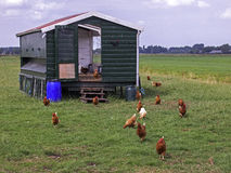 Chicken farm Royalty Free Stock Photography