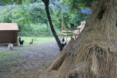 Chicken farm Royalty Free Stock Image