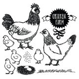 Chicken farm Sussex hen Stock Image