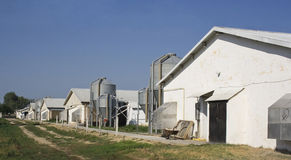 Chicken farms and silos Royalty Free Stock Image