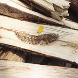 Chicken Feather on Chopped Wood. A brown chicken feather on top of halved pieces of logs royalty free stock image