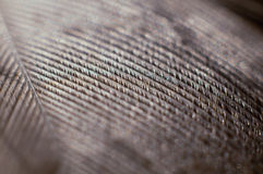 Chicken feather macro. A macro image of a chicken feather Royalty Free Stock Images