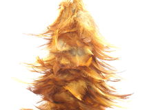 Chicken feather Royalty Free Stock Photos