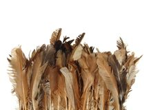 Chicken feathers are brown in color Royalty Free Stock Photos