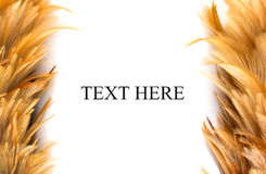 Chicken Feathers Frame Royalty Free Stock Photos