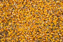 Chicken feed Stock Photo